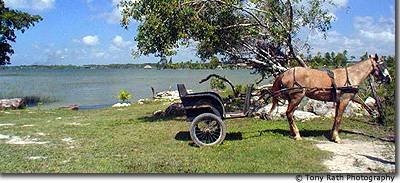 Mennonite horse and buggy at Progresso Lagoon