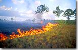 fire on the savanna